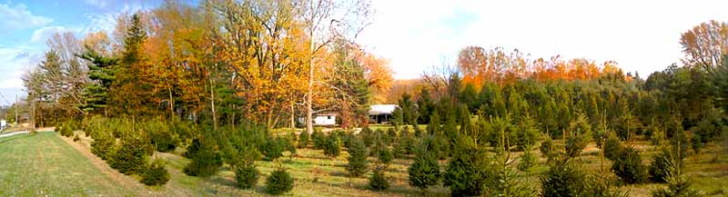 Lafayette Indiana Christmas Trees matterns pine ridge nursery front field